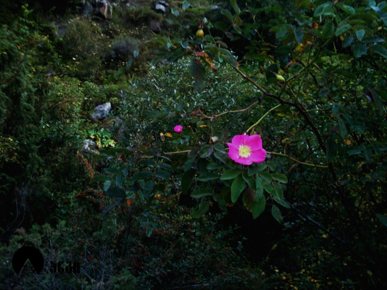 გველეთი